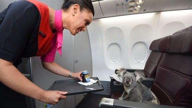 (Qantas Airlines)