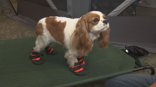 Don't forget about your dog! If the pavement is too hot for your feet, it's too hot for theirs. (Source: KPHO/KTVK)