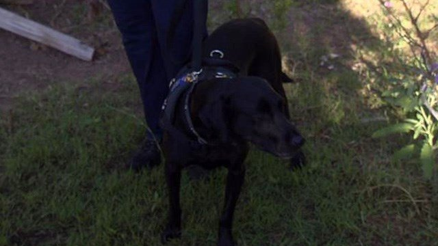 One of the specially-trained search dogs. (Source: KTVK)