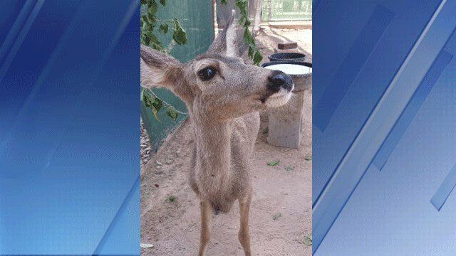 Oh deer game and fish officers seize 39 kidnapped 39 baby for Ohio fish and game