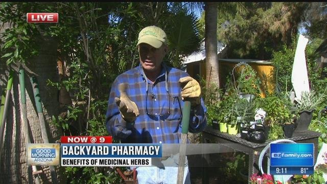 Garden Guy: Medicinal Herbs You Can Grow (part 2)