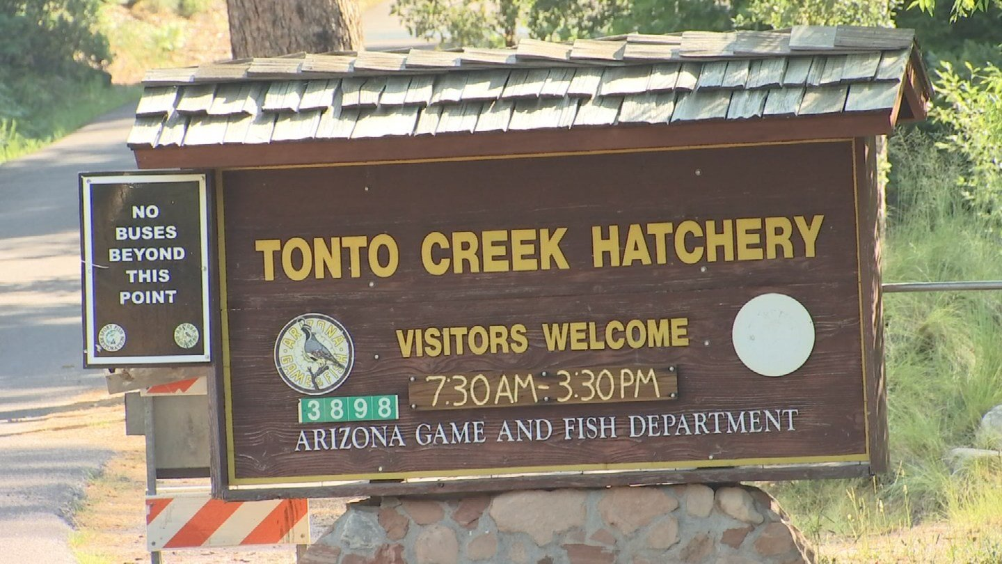 Nothing fishy about cool summer escape to tonto creek for Fish hatchery ohio