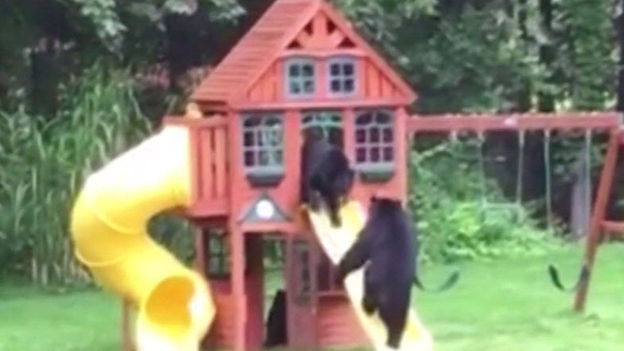 where u0027s goldilocks three bears frolic in backyard playhouse