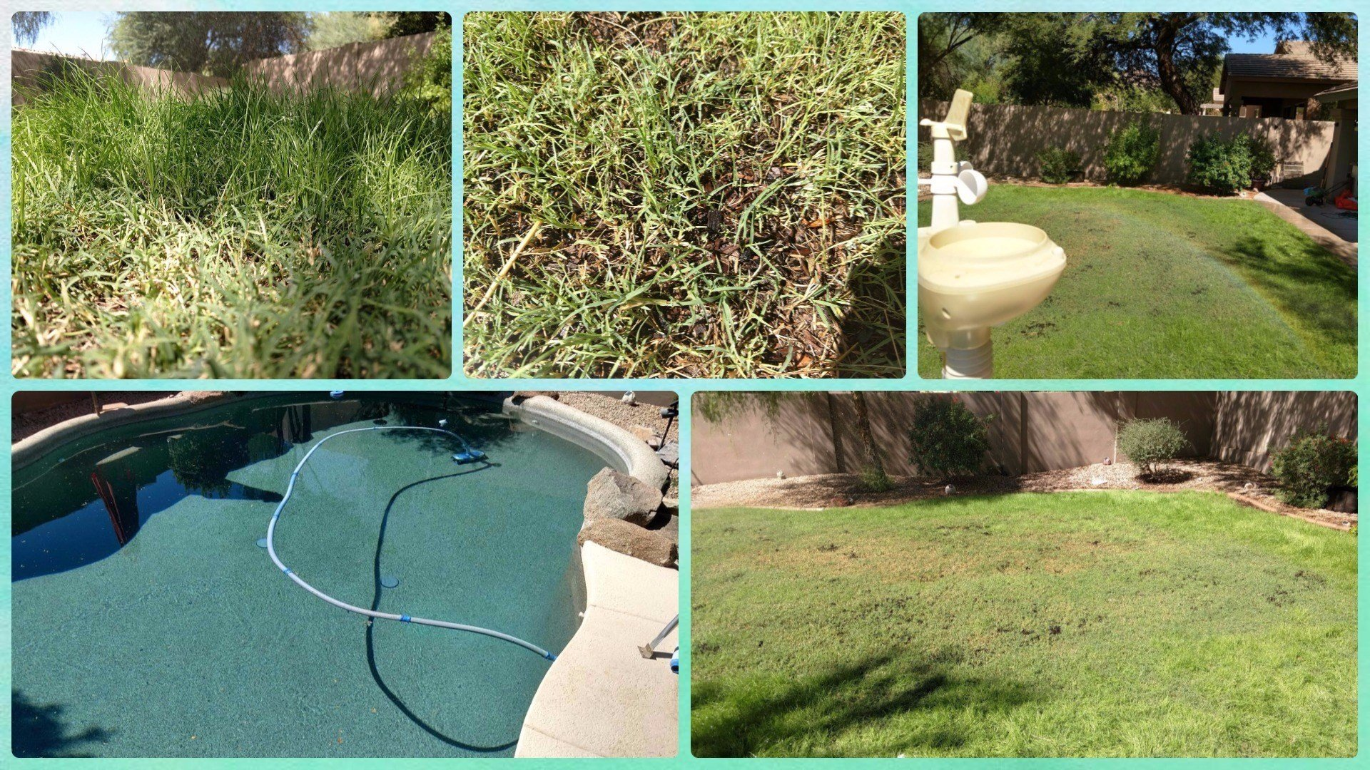 Pool Water Is Too Cold Time For Rye Grass Hawaii News Now Kgmb And Khnl