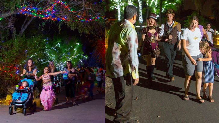 there are two trails during the howl o ween even at the phoenix zoo