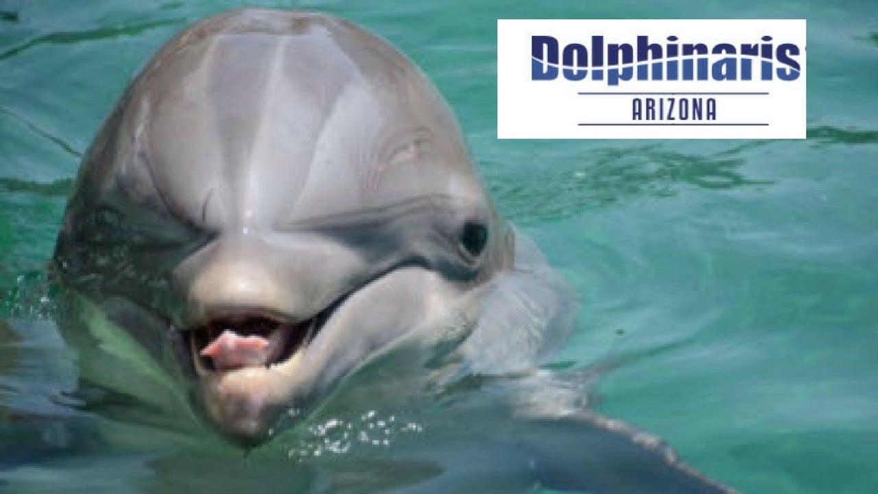 bodie u0027 the dolphin dies at dolphinaris arizona arizona u0027s family
