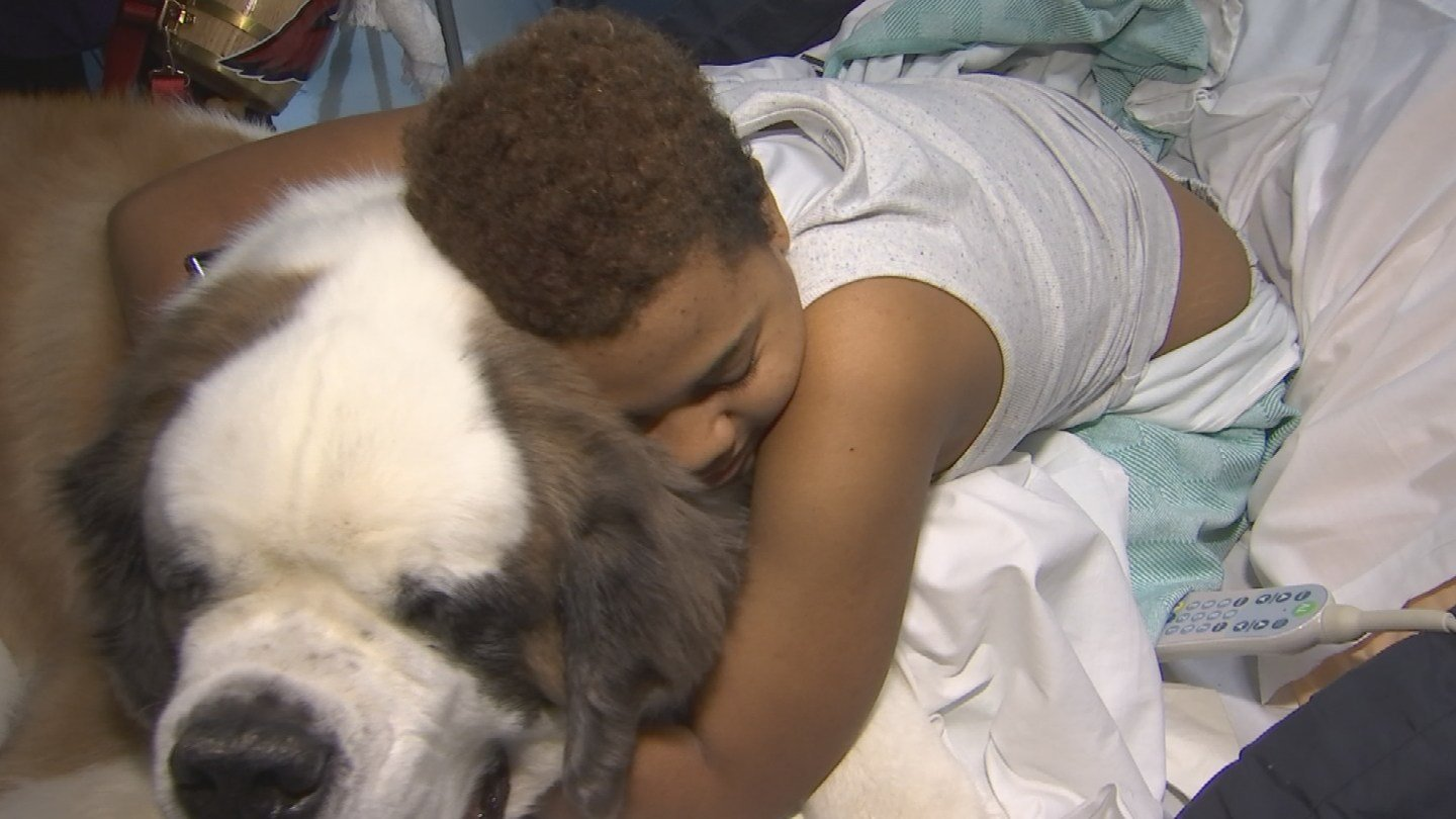 Bidwill therapy dog spreads love, Cards spirit to PCH ...