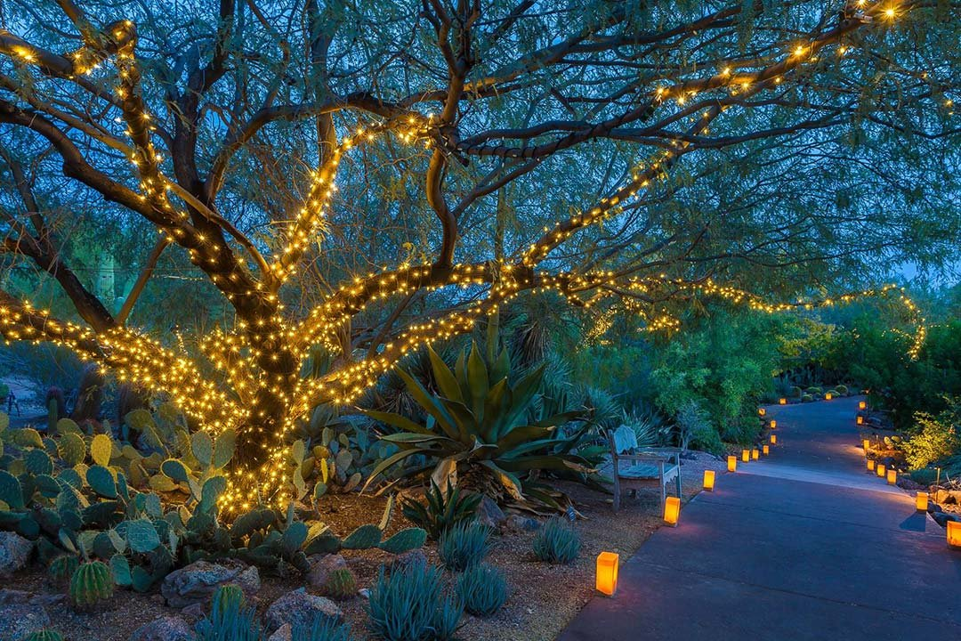 Attirant Link To Slideshow: Slideshow: Las Noches De Las Luminarias At Desert  Botanical Garden