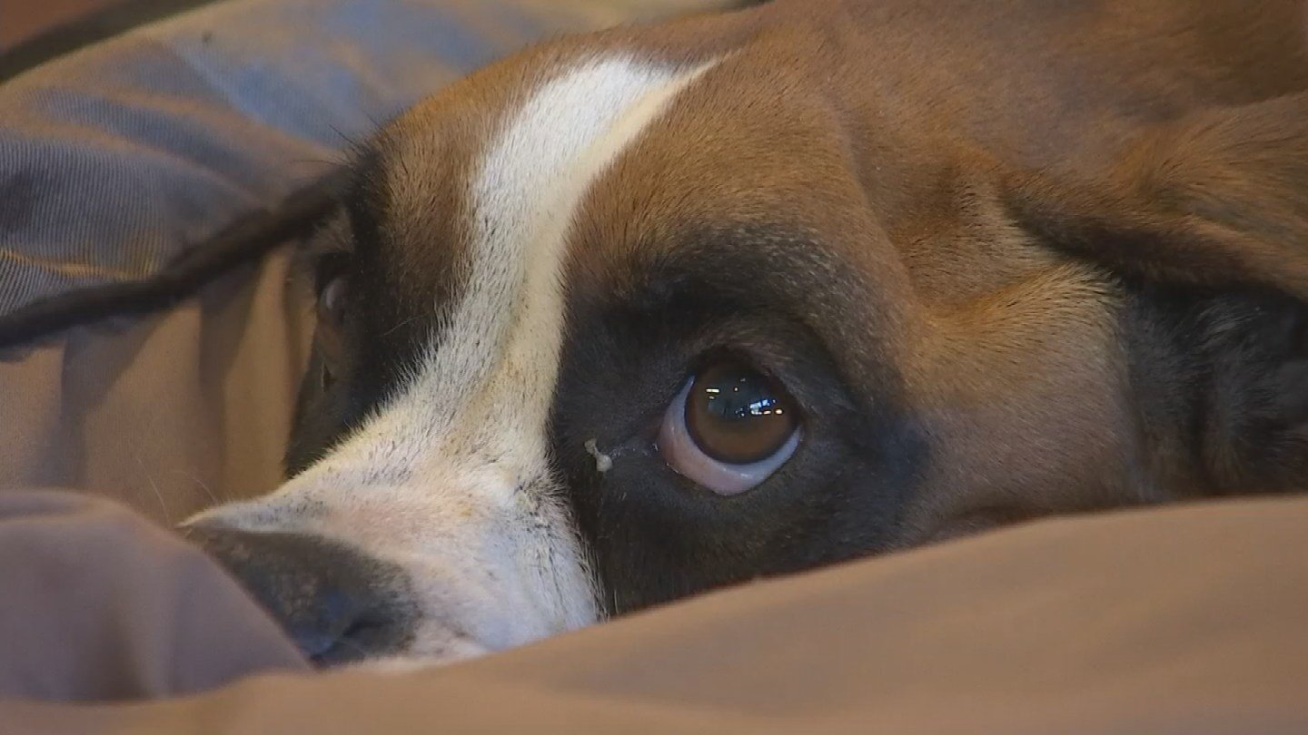 how to help a dog with fever