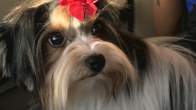 Mesa pet owner distraught after dog vanished from groomers bebe went missing after going to a dog groomer in mesa source 3tv solutioingenieria Choice Image