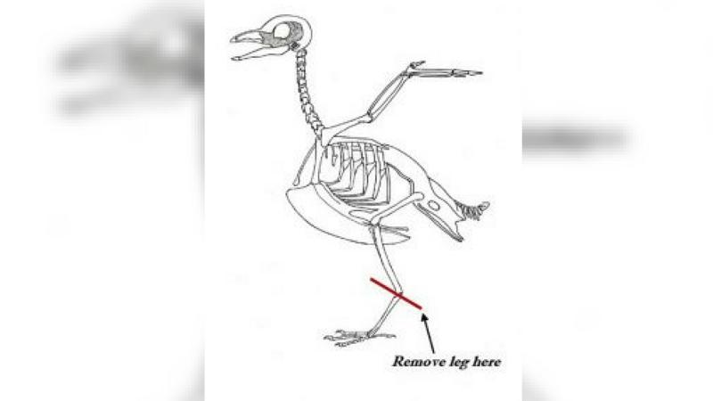Arizona Turkey Hunters Asked To Give Virus Research A Leg