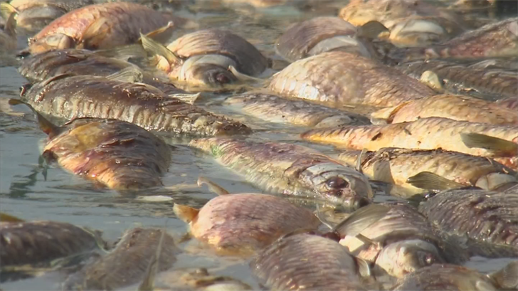 Hundreds of dead fish stink up Maricopa neighborhood ...