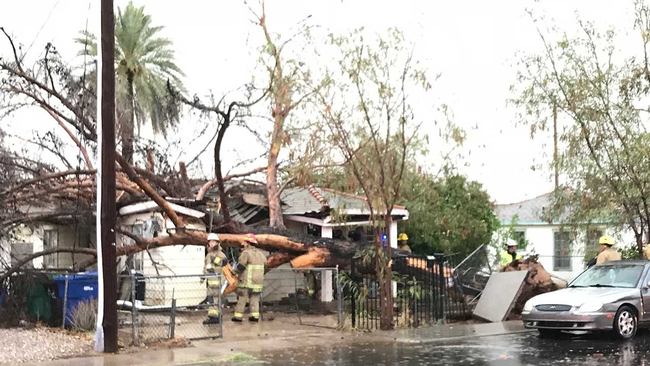 The storm sent a tree crashed down onto a Mesa home. (Source: Jim Fry, Arizona's Family)